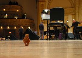 bear goes paris